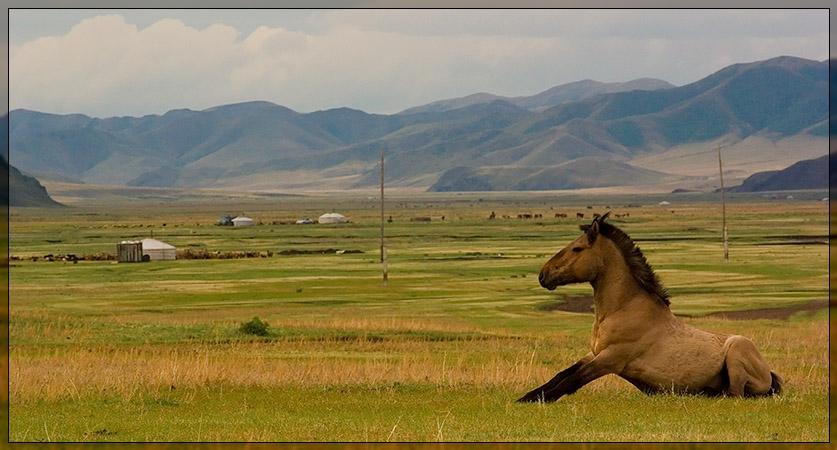 Amarbatasgalant Monastery - Horse